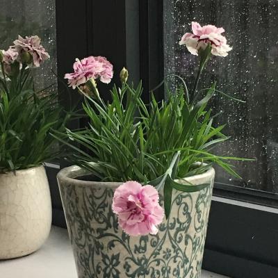 Garden Pots £9.95
