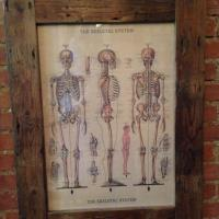Frame with Skeleton Poster